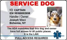 service dog identification badges. Black Bedroom Furniture Sets. Home Design Ideas